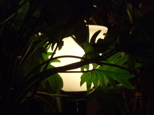 litum8greenlight-014