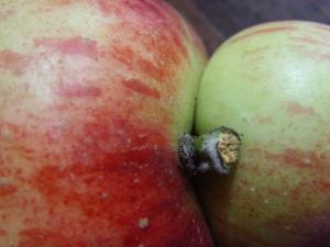 apple 012
